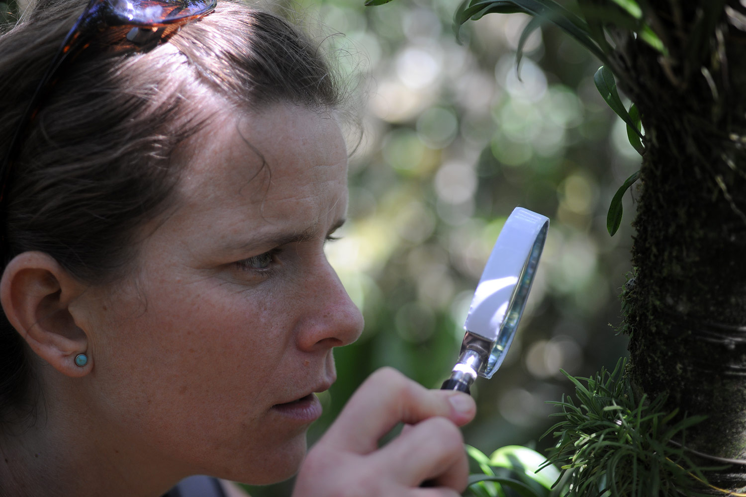 Miriam inspecting, platystele jungermannioides,the smallest orchid in the world.  Approx 2mm across.