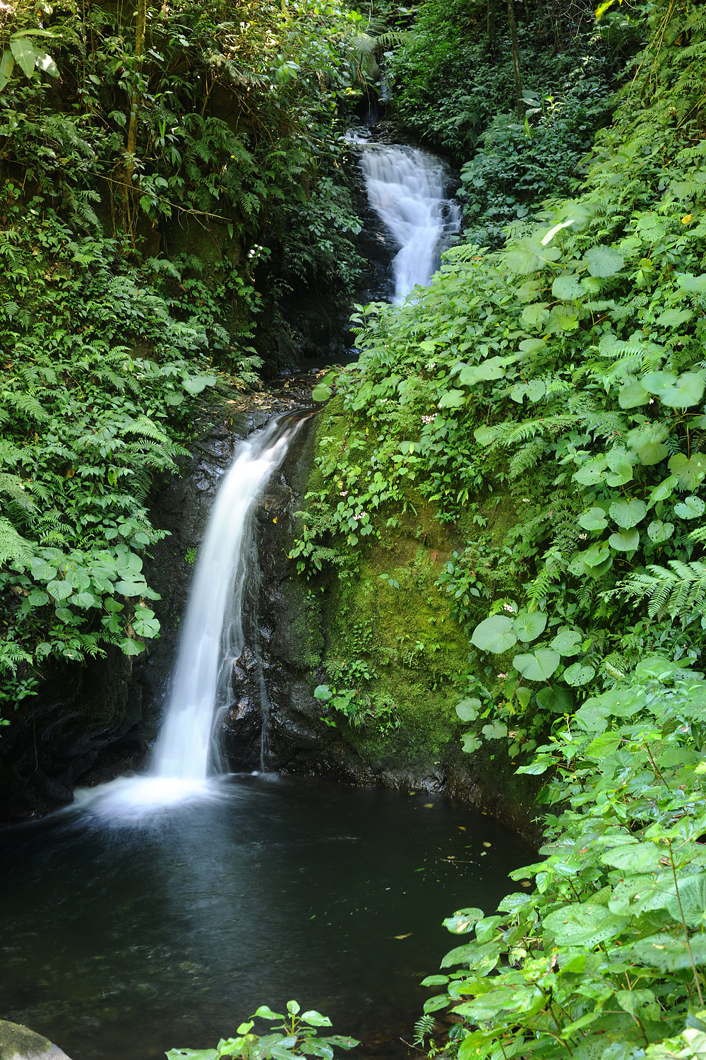 Waterfall, Monteverde Cloud Forest, Costa Rica