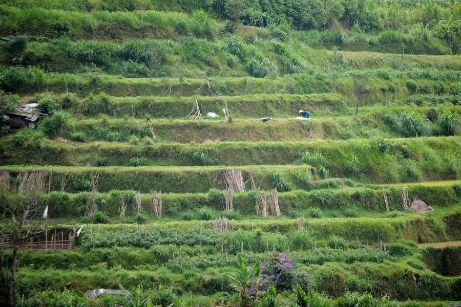 Terraced fields, Bali.
