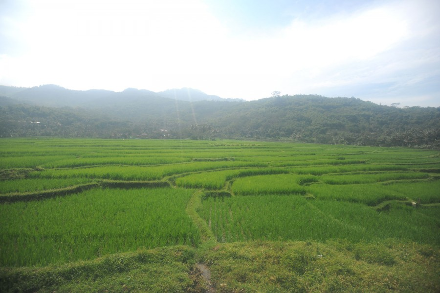 Terraced rice fields from the Bandung-Yoygakarta train